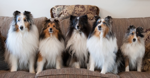 Therapy dogs (l-r): Dazzle, Kyra, Stormy, Keisha and Tori